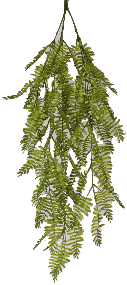 Green Yellow Hanging Wood Fern