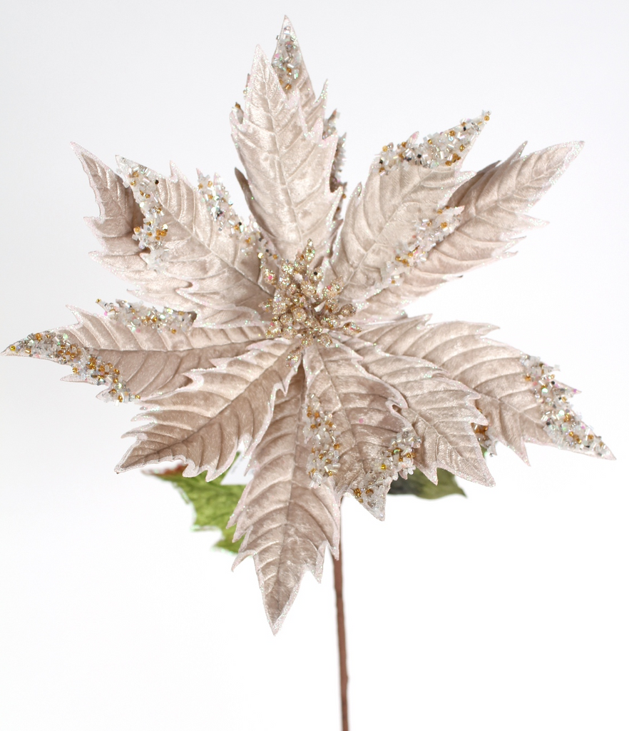 Jeweled Jumbo Champagne Poinsettia