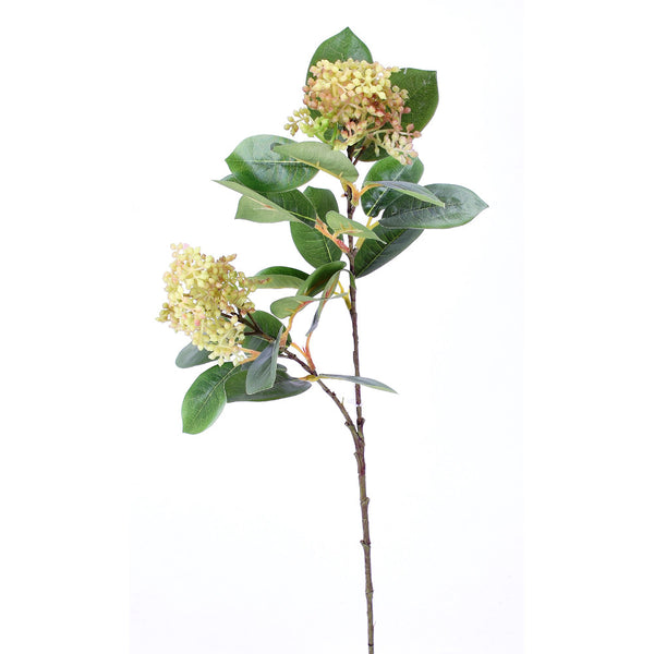 Photinia Berry Stem