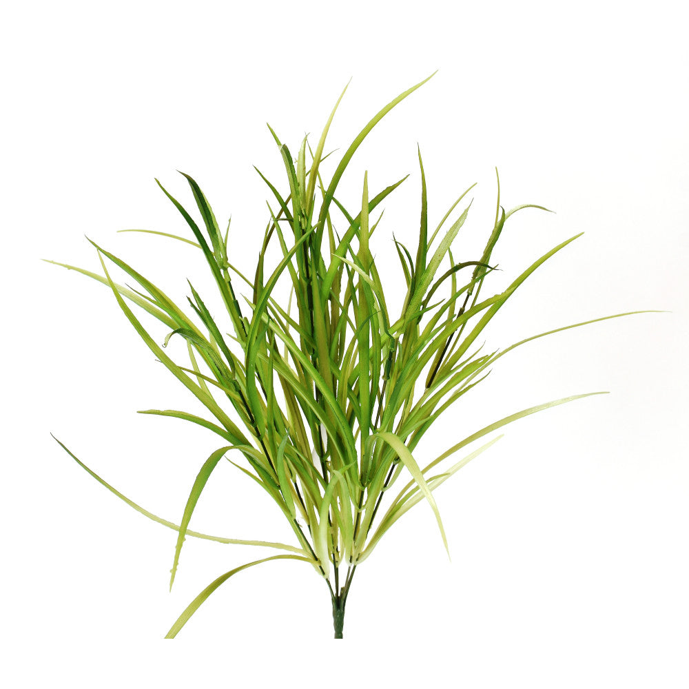 Liriope Grass Bush