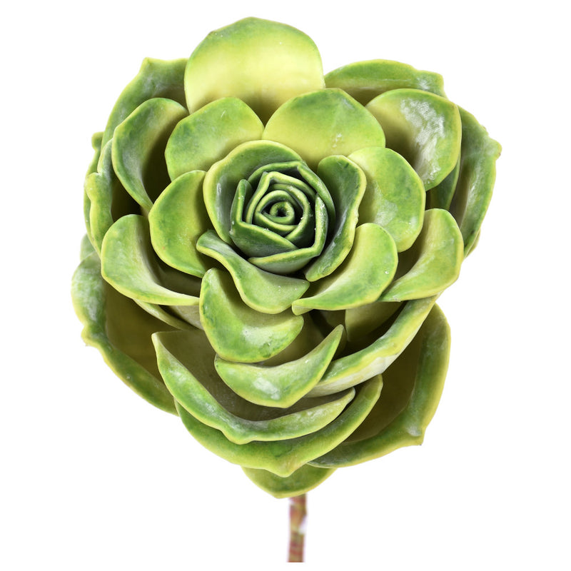 Great Green Rose Succulent Pick
