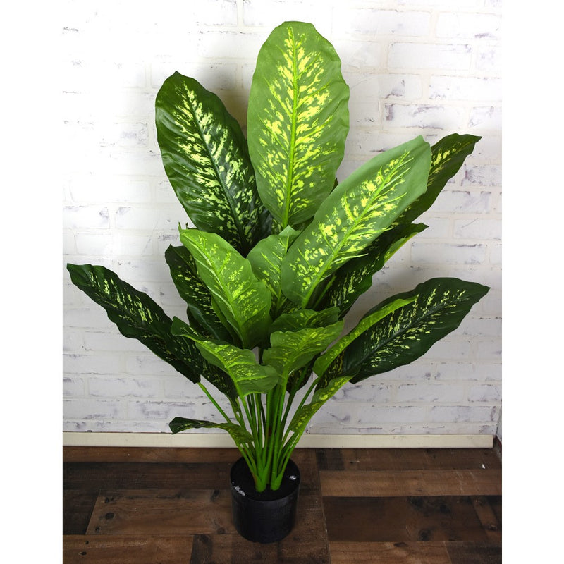 Dieffenbachia Tree Potted