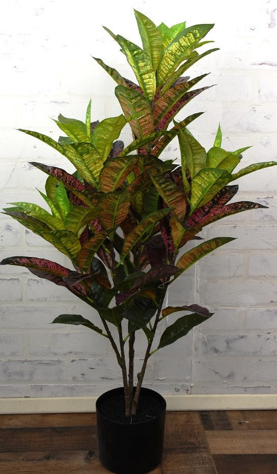 Croton Potted Plant