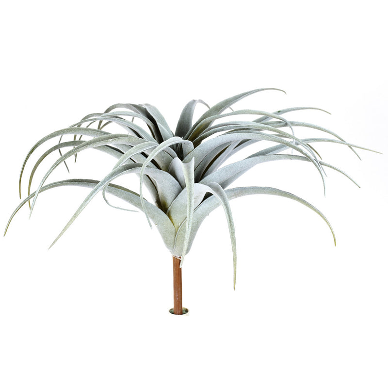 Grey Tillandsia Air Plant