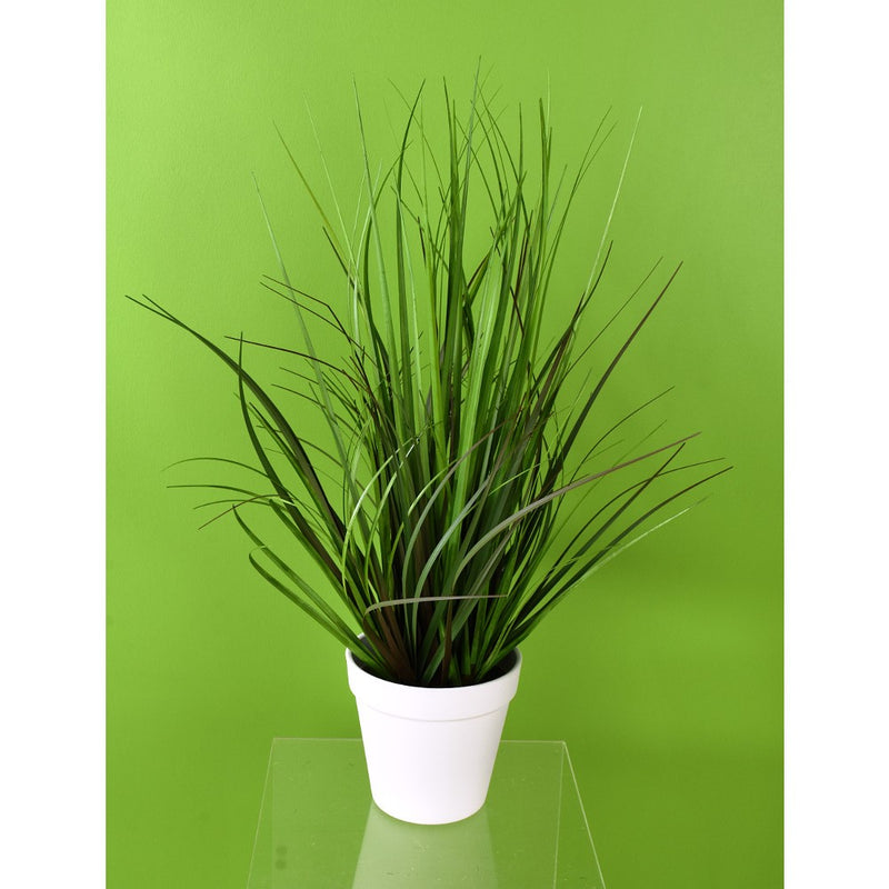 Potted Monkey Grass