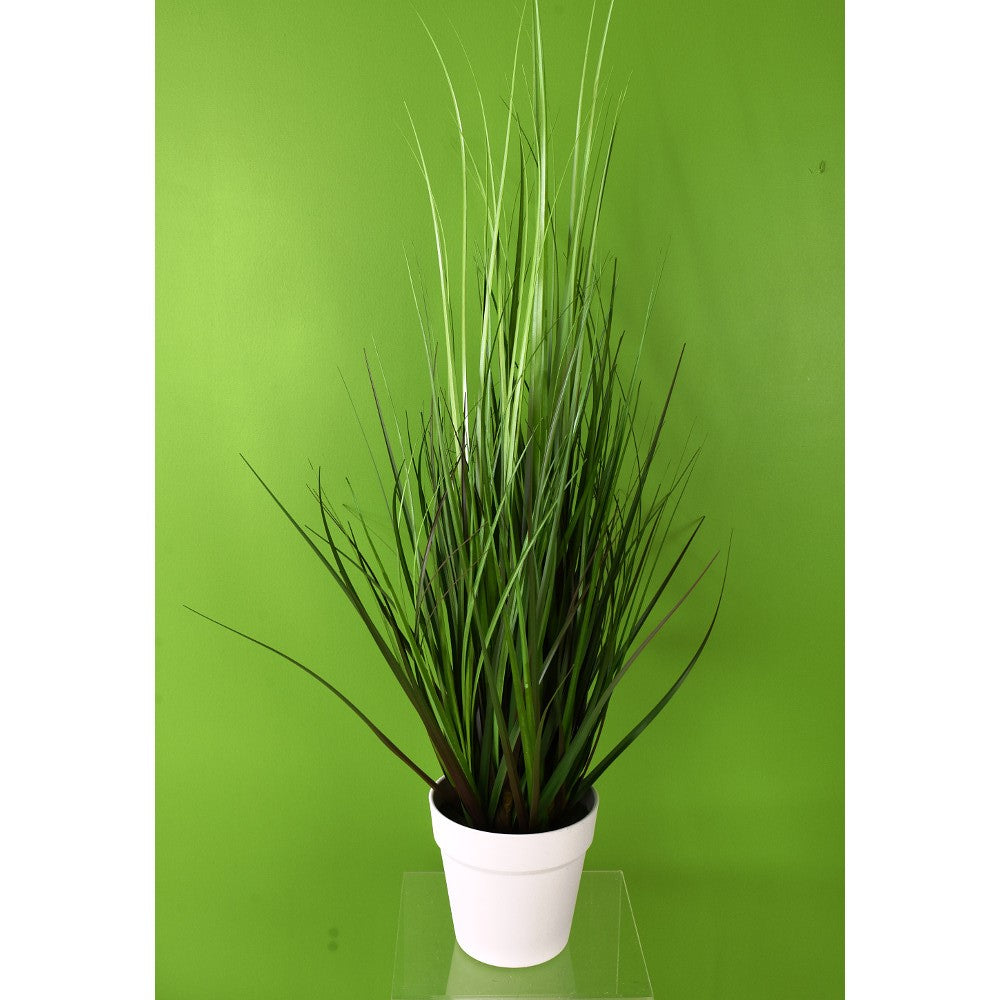 Potted Tall Monkey Grass