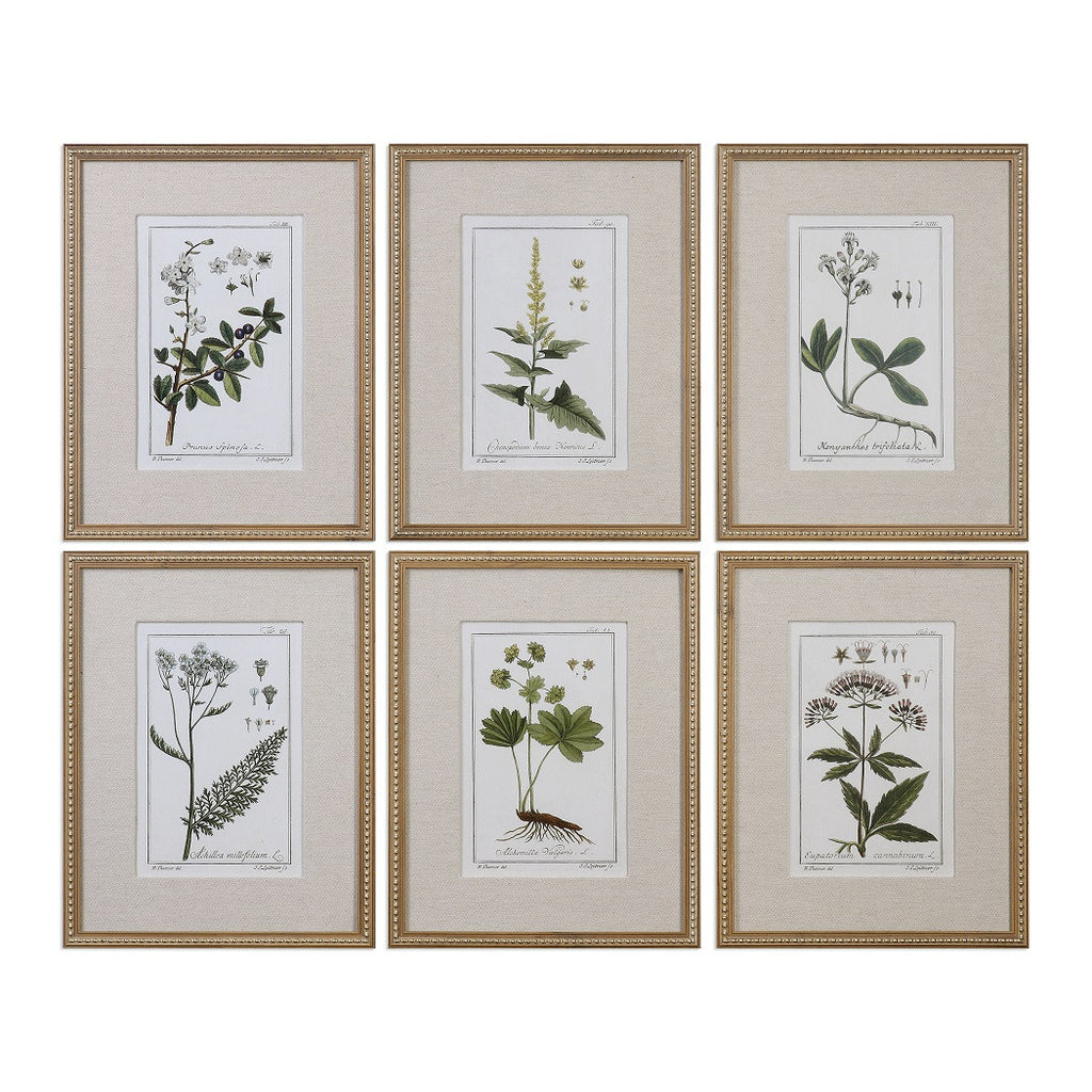 Botanical Garden Wall Art - Paul Michael Company