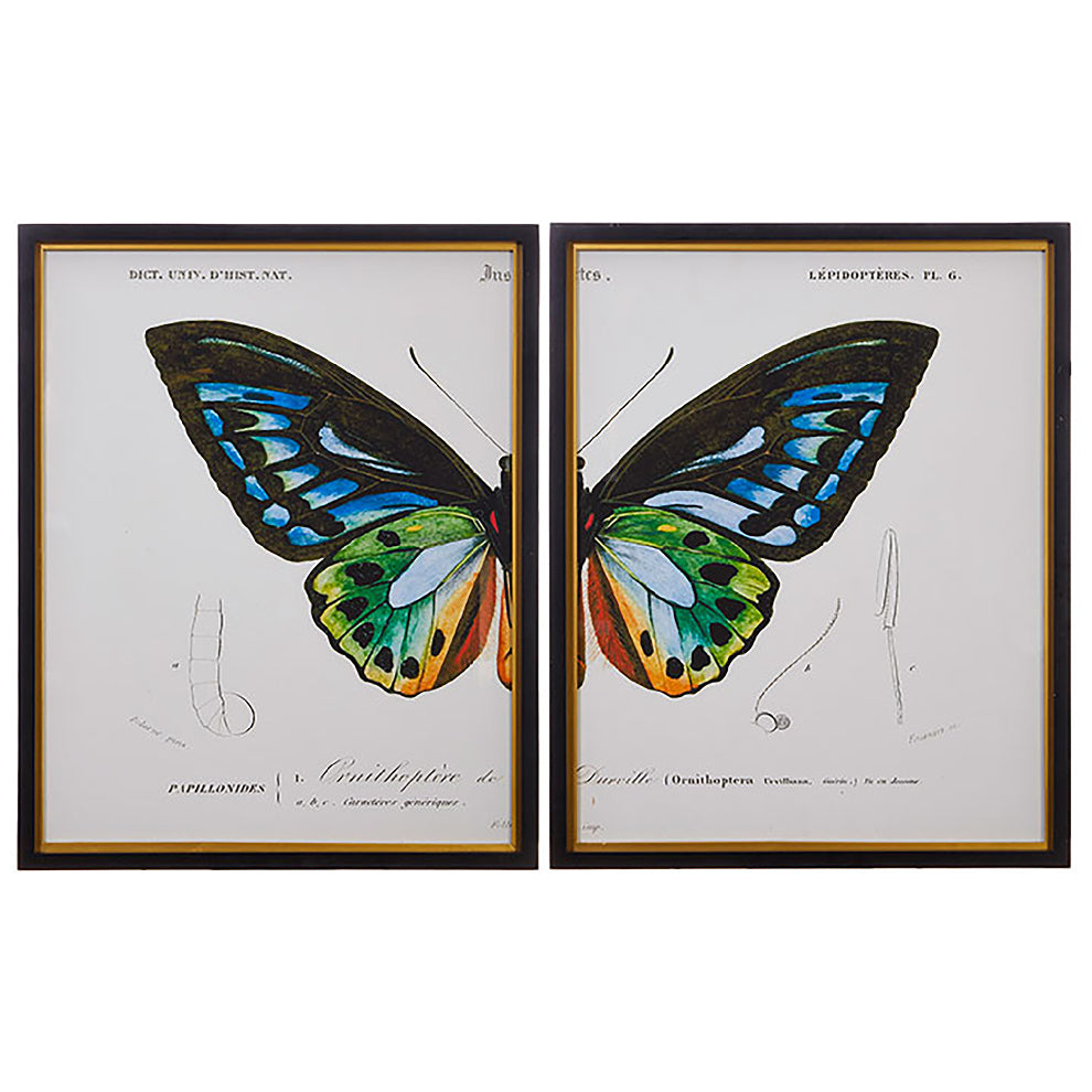 Set of Two Butterfly Prints