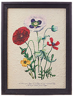 Framed Wild Flowers Wall Art