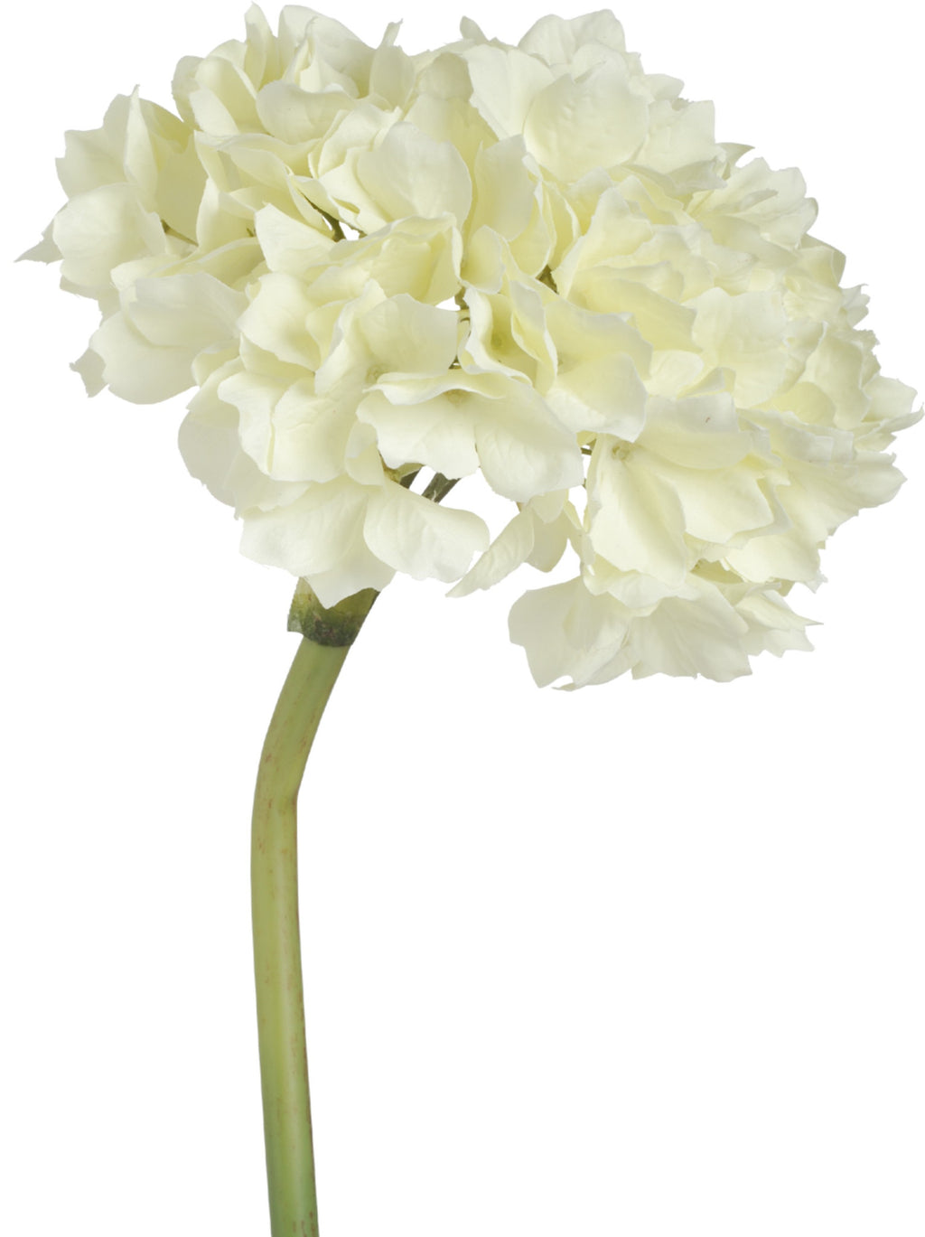 Cream Hydrangea 14in - Paul Michael Company