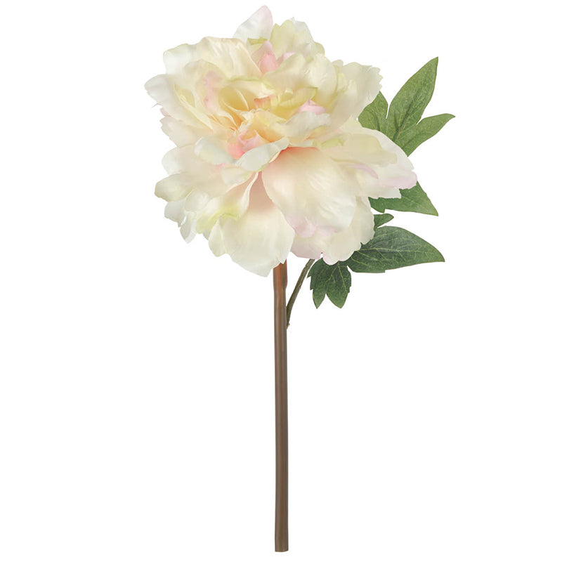 Cream Peony 14 in - Paul Michael Company