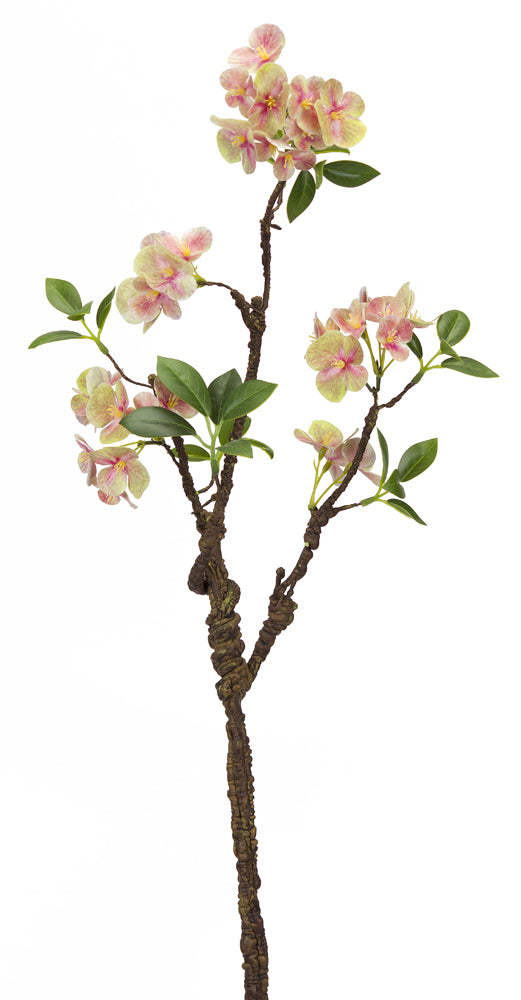 Blooming Spring Branch