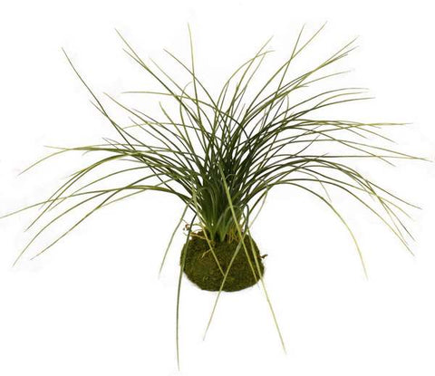 Tabletop Premade Grass Spray