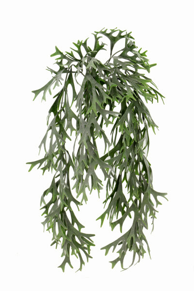 Hanging Fern Spray