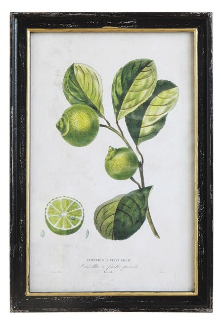 Wood Framed Vintage Lemon and Lime Prints