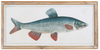 Vintage Fish Wall Art Reproduction