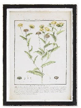 Wood Framed Wild Flower Prints