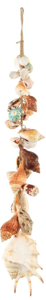 Natural Shell on Strand Decor