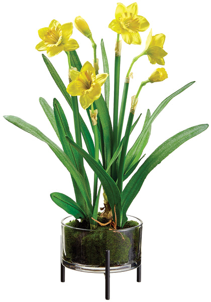 Yellow Daffodils in Glass Vase