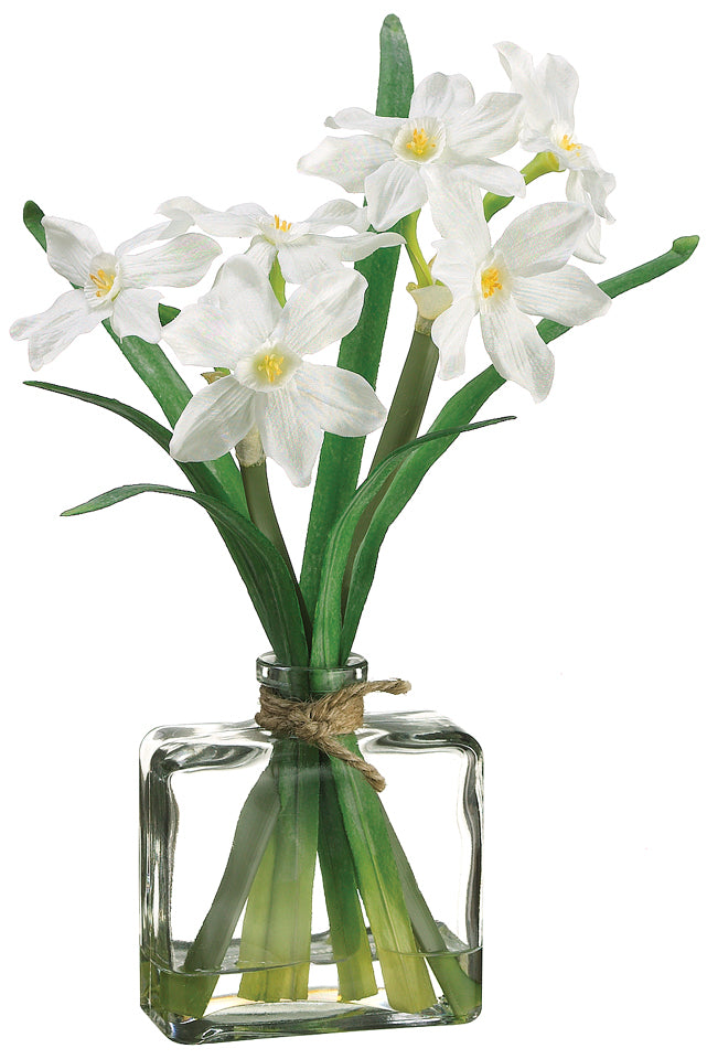 White Narcissus in Glass Vase