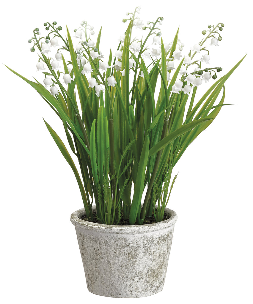 Lily of the Valley in Pot