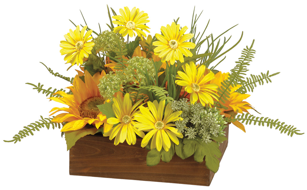 Sunflower Daisy Queen Ann Lace Potted Arrangement