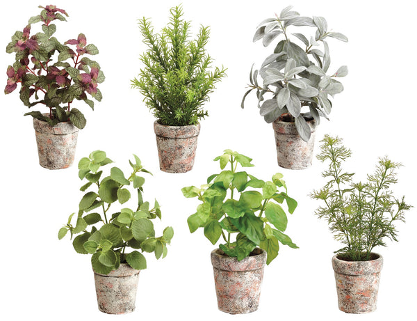 Garden Herbs in Clay Pots