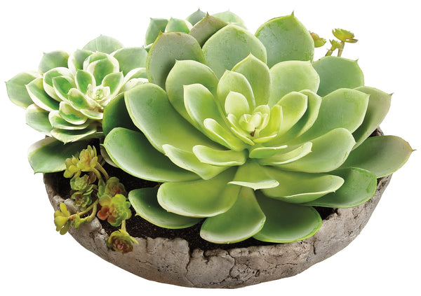 Succulent Arrangement in Cement Pot