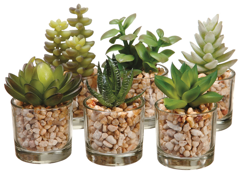 Succulents in Glass Vases