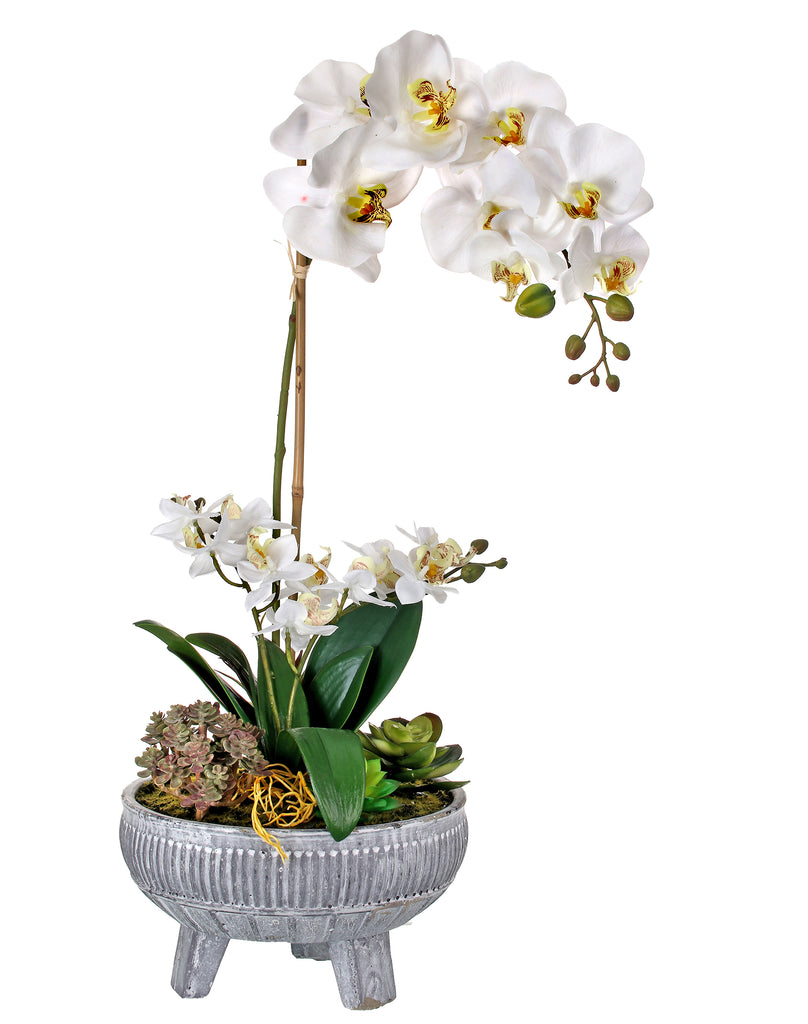 Phaleanopsis Succulent in Potted Zen Bowl