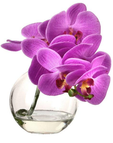 Purple Orchid in Glass Vase