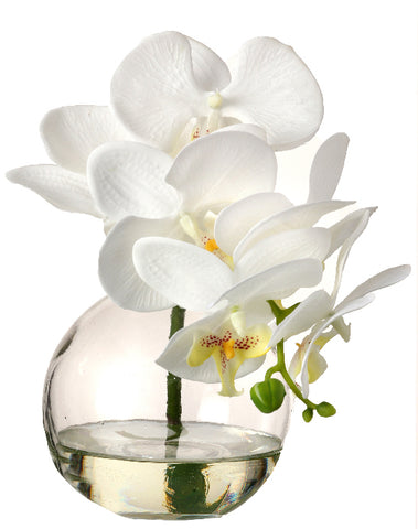 White Orchid in Glass Vase