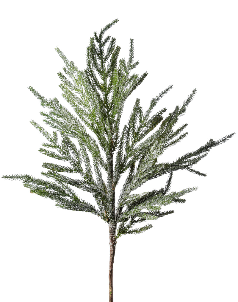 Norfolk Frosted Pine Branch