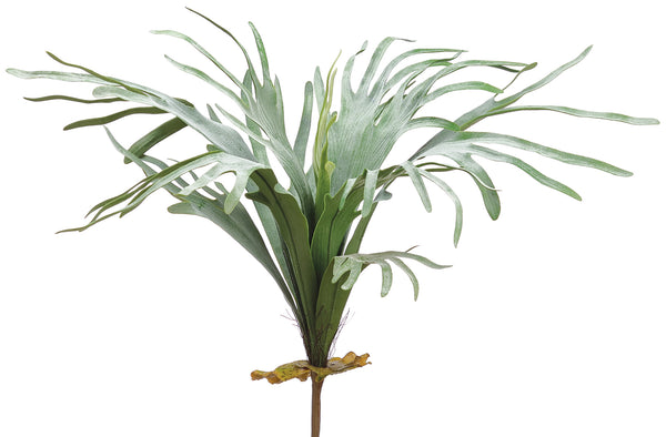 Staghorn Fern Bush