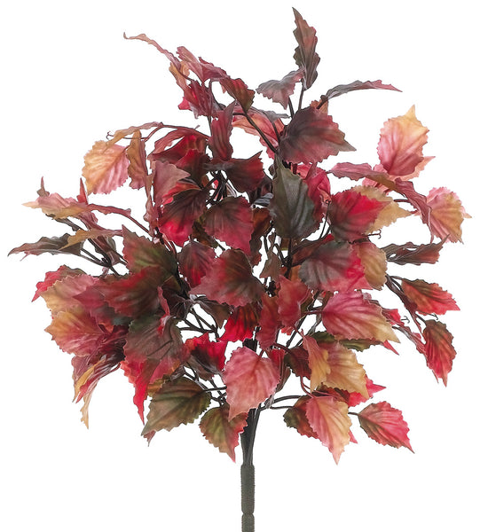 Fall Coleus Leaf Bush