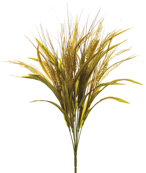 Wheat Rice Grass Bush