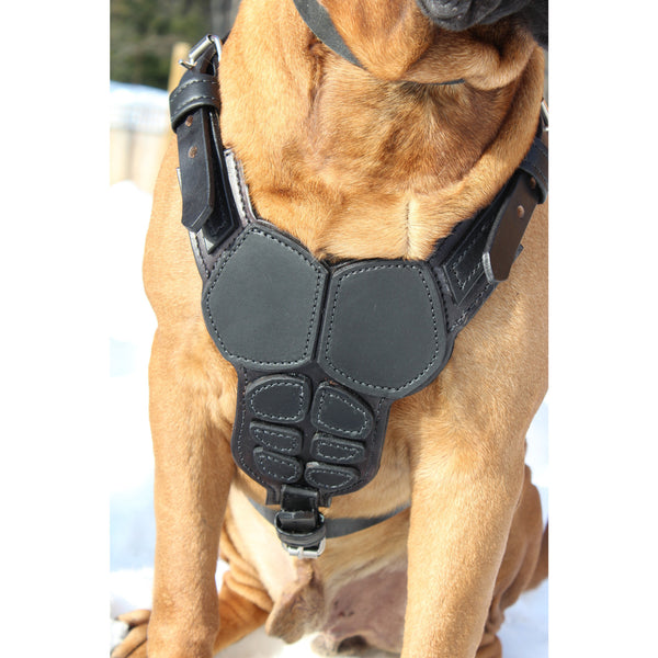 Body Armor Harness - Oli Collars