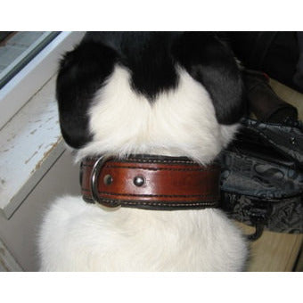 leather dog collar (OLI COLLARS)