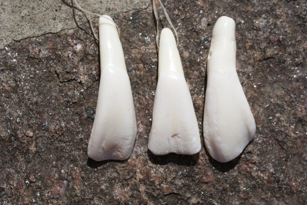 Buffalo Teeth