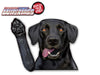 Indy the Black Labrador Retriever Waving Dog WiperTags