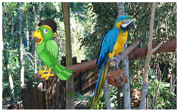 australia zoo macaw with zoolu card game
