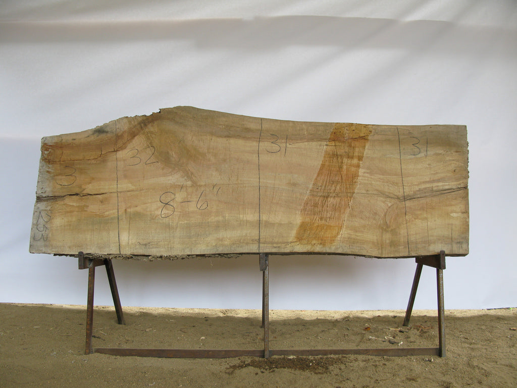 "Spalted Maple B Slab 3"" x 31"" x 8.5' SPM-253"
