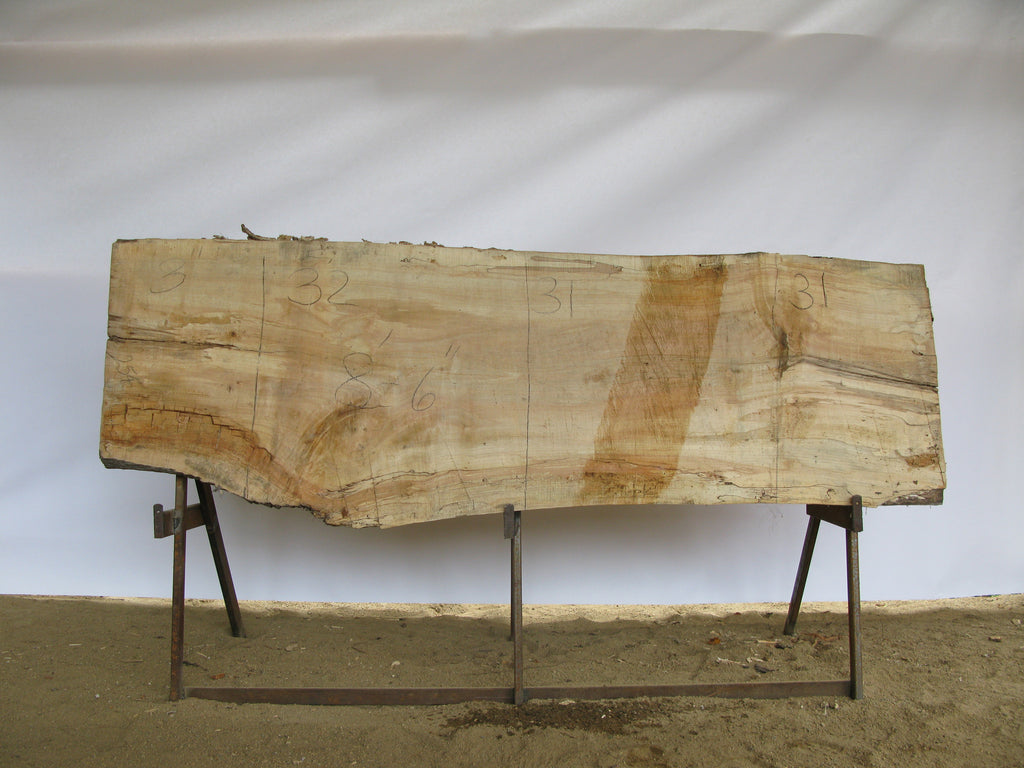 "Spalted Maple B Slab 3"" x 31"" x 8.5' SPM-254"