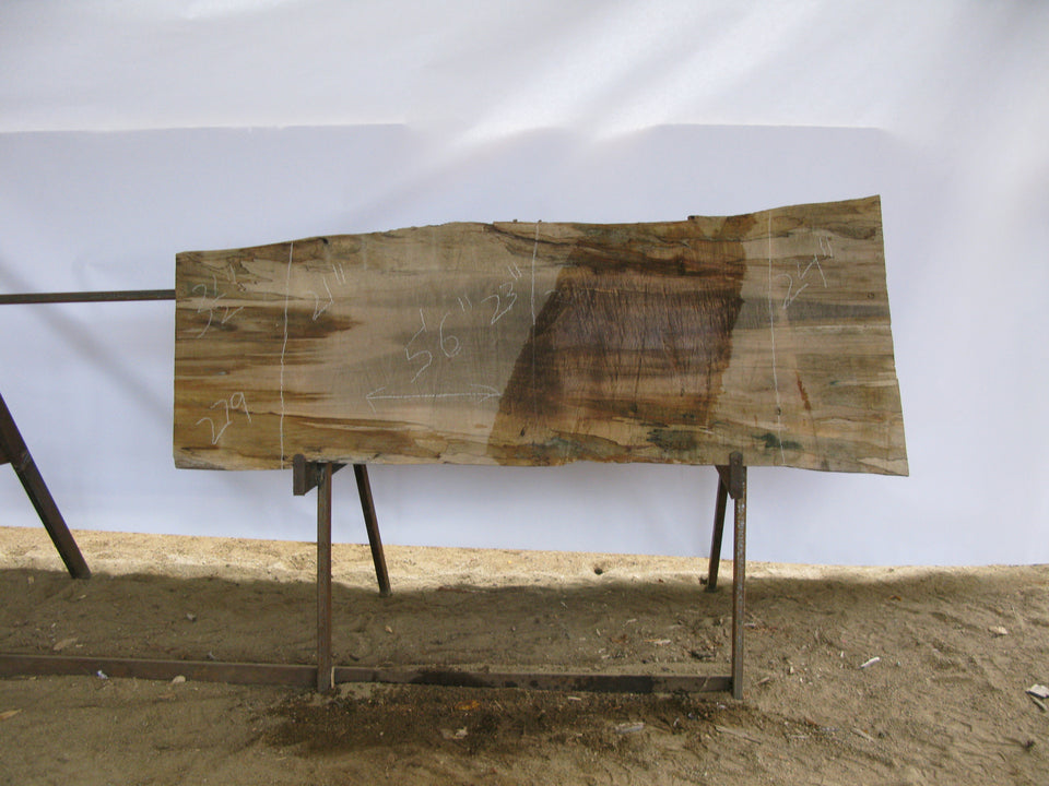 "Spalted Maple A Slab 3.5"" x 23"" x 5.5' SPM-279"