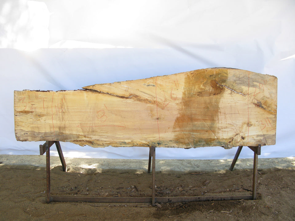 "Spalted Maple B Slab 3.5"" x 24"" x 8' MAP-311"