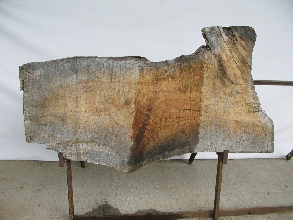 "Spalted Maple B Slab 3"" x 28"" x 4.5' SPM-457"
