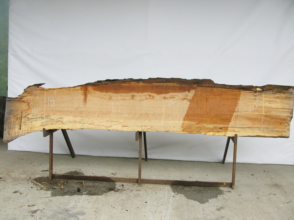 "Spalted Maple B Slab 3.5"" x 20"" x 10' SPM-462"