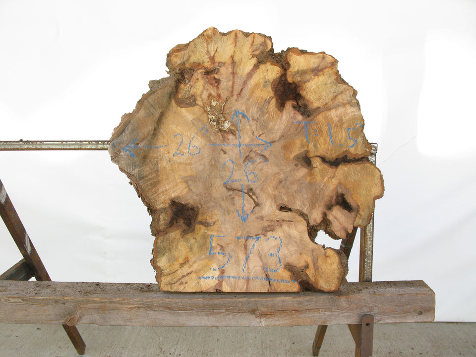 "Yellow Birch Burl Slice 1.5"" x 26"" x 2.25' YB-573"