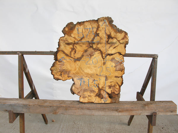 "Yellow Birch Burl Slice 1.5"" x 20"" x 2' YB-575"