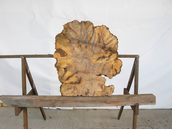 "Yellow Birch Burl Slice 1.5"" x 26"" x 2.25' YB-574"